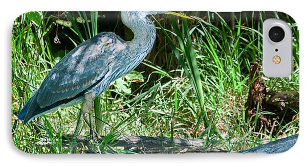 Great Blue Heron Fish Meal IPhone Case by Edward Peterson