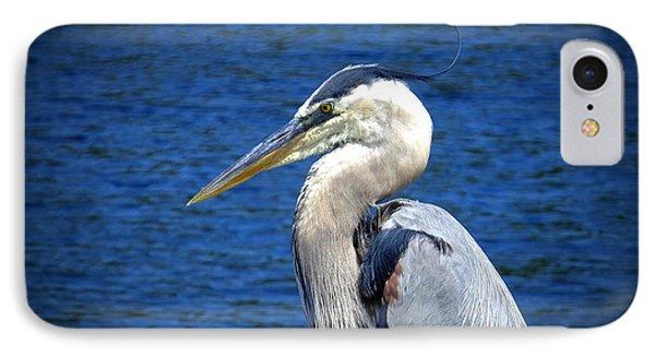 Great Blue Heron Glamor Shot IPhone Case by Judy Wanamaker