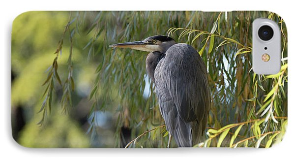 Great Blue Heron In A Willow Tree IPhone Case by Keith Boone