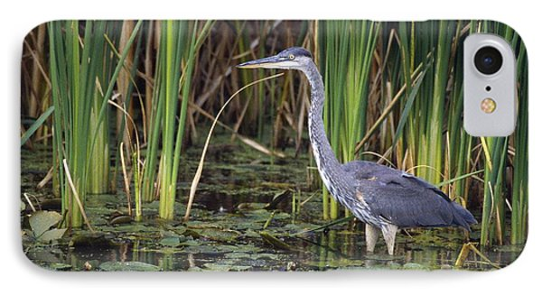 Great Blue Heron Phone Case by Natural Selection David Spier