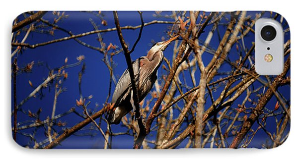 IPhone Case featuring the photograph Great Blue Heron Nesting 2017 - 1 by Terry Elniski