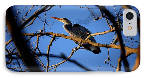 IPhone Case featuring the photograph Great Blue Heron Nesting 2017 - 2 by Terry Elniski