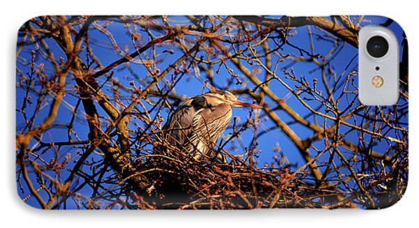 IPhone Case featuring the photograph Great Blue Heron Nesting 2017 - 4 by Terry Elniski