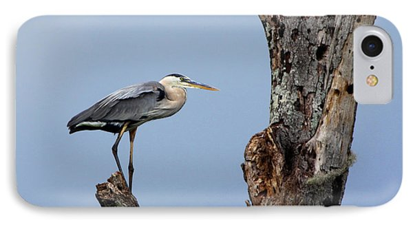 Great Blue Heron Perched IPhone Case by Barbara Bowen