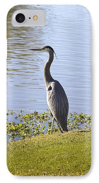 IPhone Case featuring the photograph Great Blue Heron by Phyllis Denton