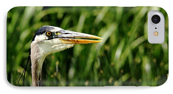 IPhone Case featuring the photograph Great Blue Heron Portrait by Debbie Oppermann