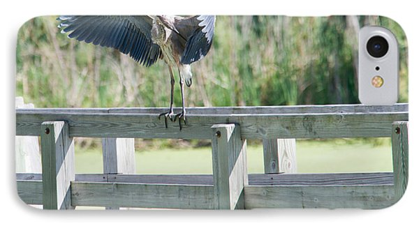 Great Blue Heron Preening IPhone Case by Edward Peterson