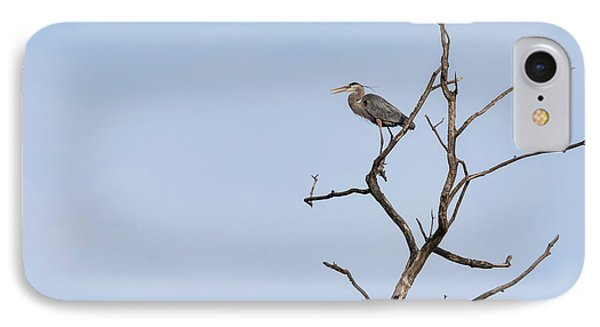 Great Blue Heron Presentation 2017-1  IPhone Case by Thomas Young