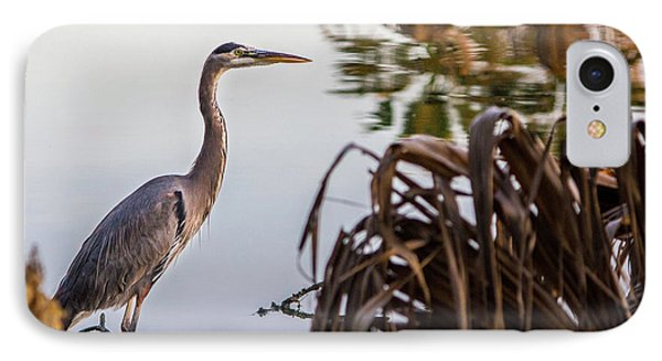 Great Blue Heron IPhone Case by Randy Bayne