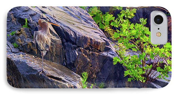 Great Blue Heron IPhone Case by Rick Berk