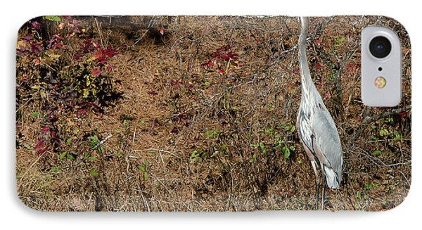 Great Blue Heron Standing Tall IPhone Case by George Randy Bass