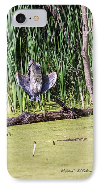 Great Blue Heron Sunning IPhone Case by Edward Peterson
