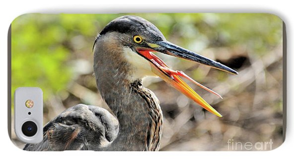 Great Blue Heron Tongue IPhone Case by Debbie Stahre