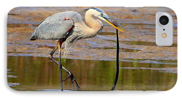Great Blue Heron Wrestles A Snake IPhone Case by Barbara Bowen
