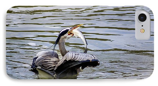Great Blue With A Drum IPhone Case by Robert Frederick