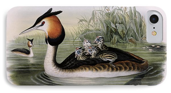 Great Crested Grebe  IPhone Case by John Gould