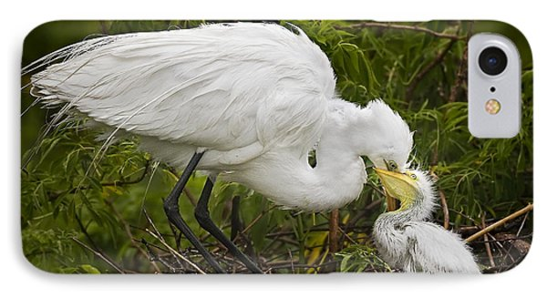 Great Egret And Chick IPhone Case by Susan Candelario