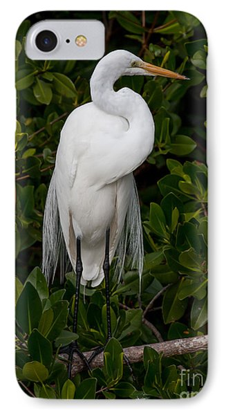 IPhone Case featuring the photograph Great Egret by Chris Scroggins
