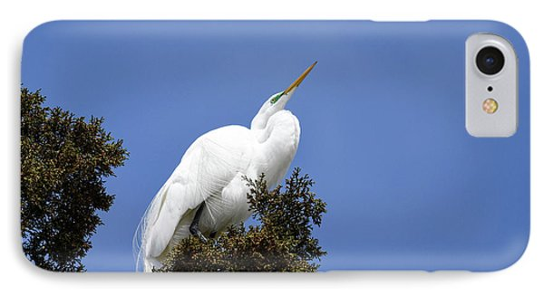 IPhone Case featuring the photograph Great Egret by Gary Wightman