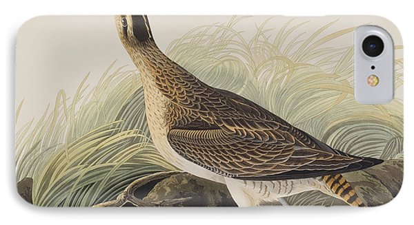 Great Esquimaux Curlew IPhone Case