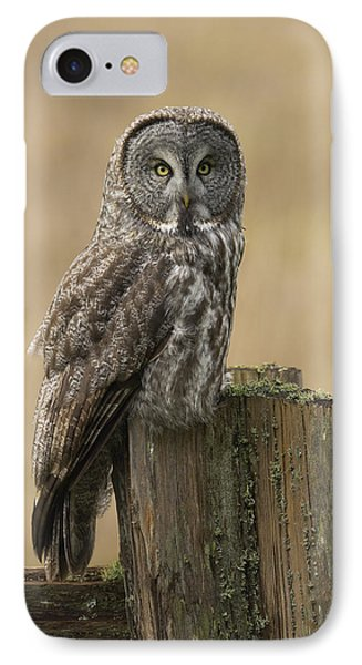 Great Gray Owl IPhone Case by Doug Herr
