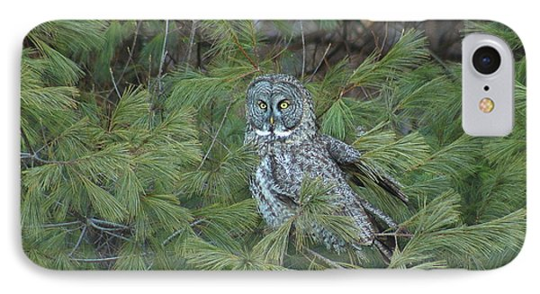 Great Gray Owl In Pine Tree IPhone Case by John Burk