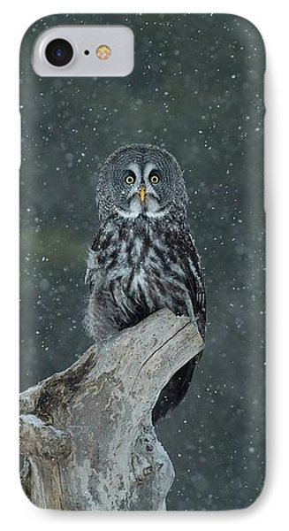 Great Gray Owl In Snowstorm IPhone Case by CR Courson