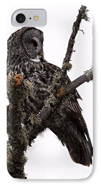 Great Grey Owl Phone Case by Larry Ricker