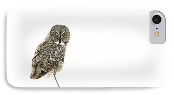 IPhone Case featuring the photograph Great Grey Owl On White by Mircea Costina Photography