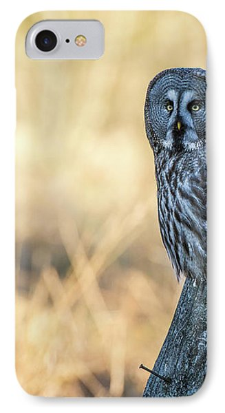 Great Grey Perching IPhone Case by Torbjorn Swenelius