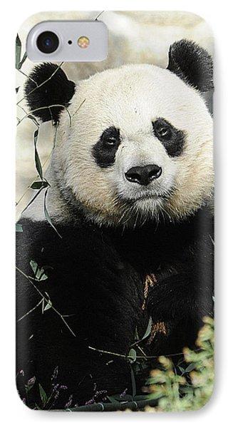 Great Panda II IPhone Case