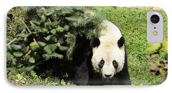 Great Panda Iv Phone Case by Keith Lovejoy