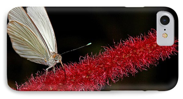 IPhone Case featuring the photograph Great Southern White by Judy Vincent