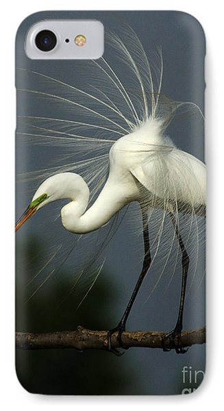 Majestic Great White Egret High Island Texas IPhone Case by Bob Christopher