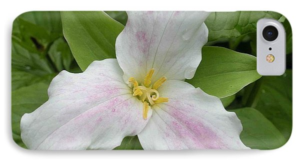 Great White Trillium IPhone Case