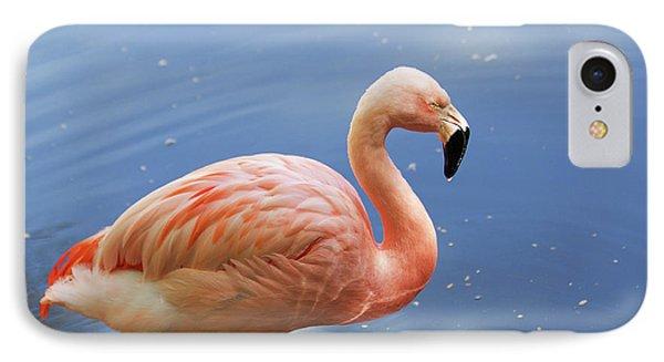 Greater Flamingo IPhone Case by Afrodita Ellerman