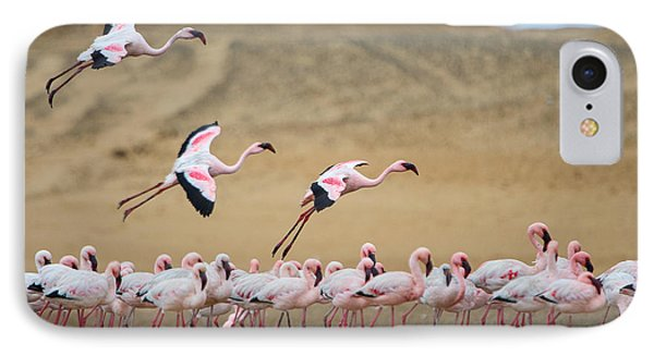 Greater Flamingos Phoenicopterus IPhone Case by Panoramic Images