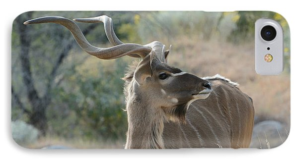 IPhone Case featuring the photograph Greater Kudu 4 by Fraida Gutovich