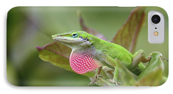 Green Anole IPhone Case by Terri Mills