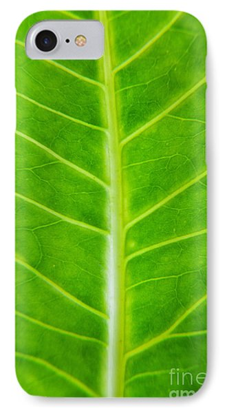 Green Botany -  Part 2 Of 3 IPhone Case by Sean Davey