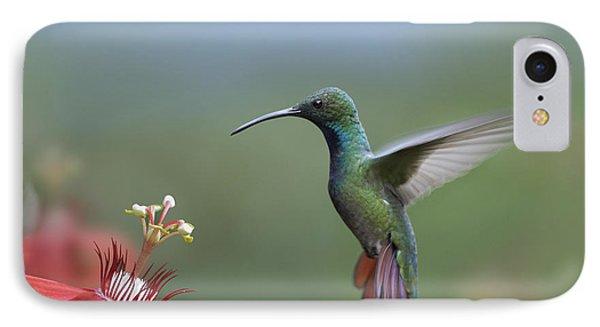 Green Breasted Mango Hummingbird Male Phone Case by Tim Fitzharris