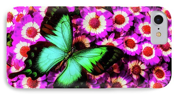 Green Butterfly On Pericallis Flowers IPhone Case by Garry Gay
