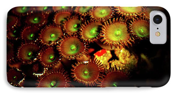 IPhone Case featuring the photograph Green Button Polyps by Anthony Jones