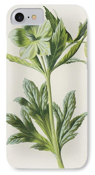 Green Hellebore IPhone Case by Frederick Edward Hulme