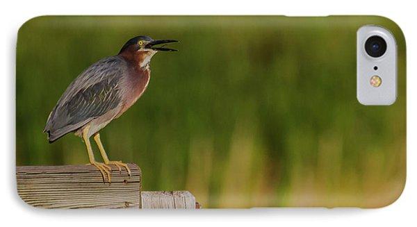 Green Heron Evening IPhone Case