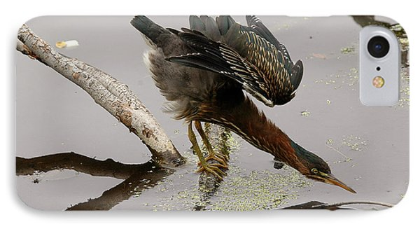 Green Heron IPhone Case by JT Lewis
