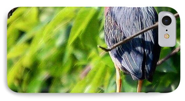 Green Heron IPhone Case by Sumoflam Photography