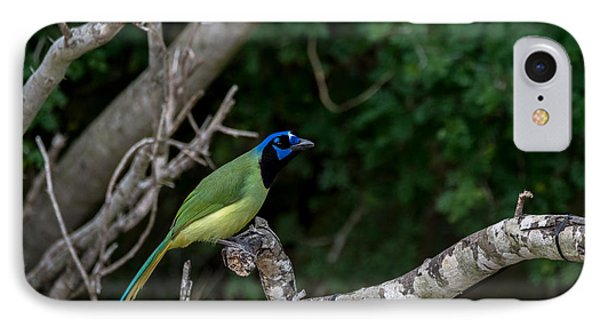 Green Jay IPhone Case