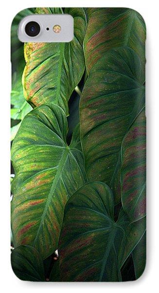 Green Leaves At Akaka Falls IPhone Case by Lori Seaman