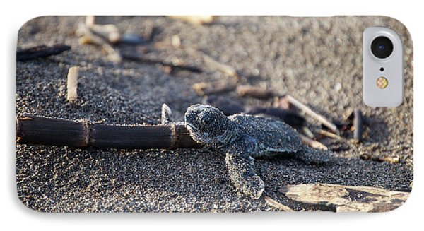 Green Sea Turtle Hatchling IPhone Case by Breck Bartholomew